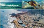 آبشیرینکنها خلیج فارس راتهدید میکنند/ تغییر بافت جمعیتی آبزیان