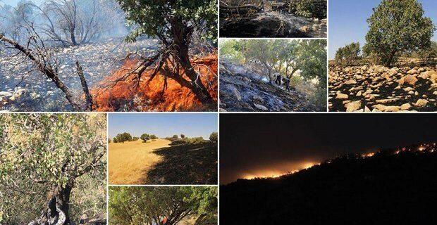 آتشسوزی در «سفید کوه» خرمآباد/ تلاش برای مهار حریق ادامه دارد
