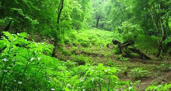 استفاده از پادگانهای نیروهای مسلح جهت توسعه زراعت چوب و فضای سبز