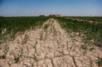 تداوم خشکسالیها در استان بوشهر/ کشت متراکم و گلخانهای تقویت شود