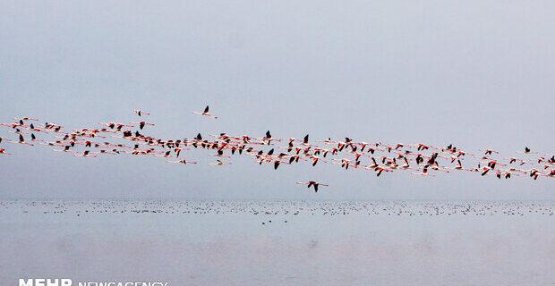 دورهمی پرندگان مهاجر در میانکاله/ پاییزگذرانی ۱۰۰ گونه