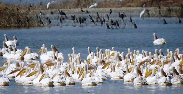 مهاجرت پرندگان به تالابهای خوزستان آغاز شد